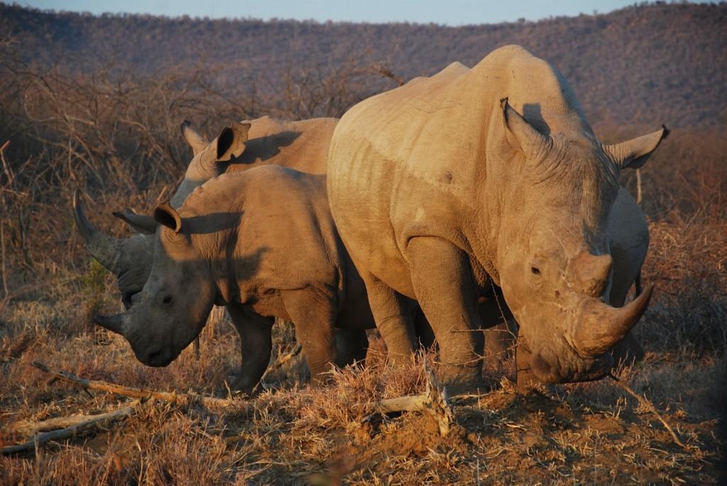 Rhino E1353103980155