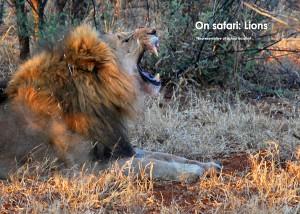 safari 8