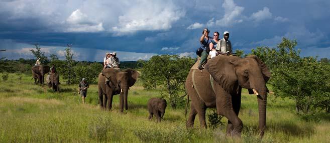 elephant safari 2