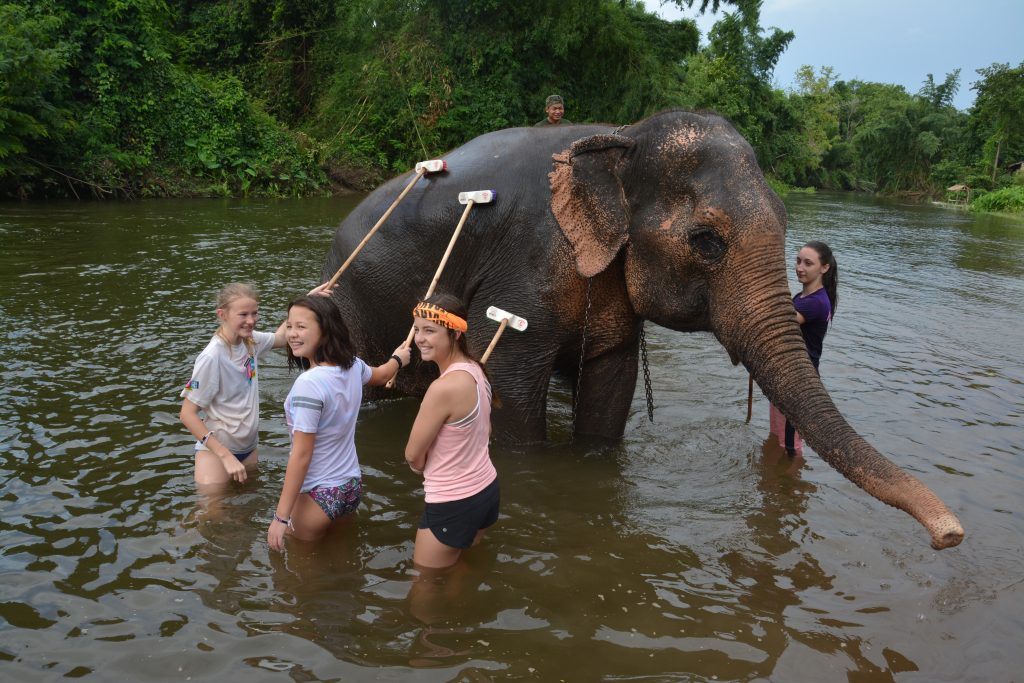 Elephant's World sanctuary, Kachanaburi, Thailand