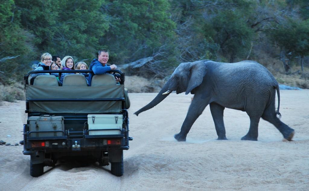 caris elephant