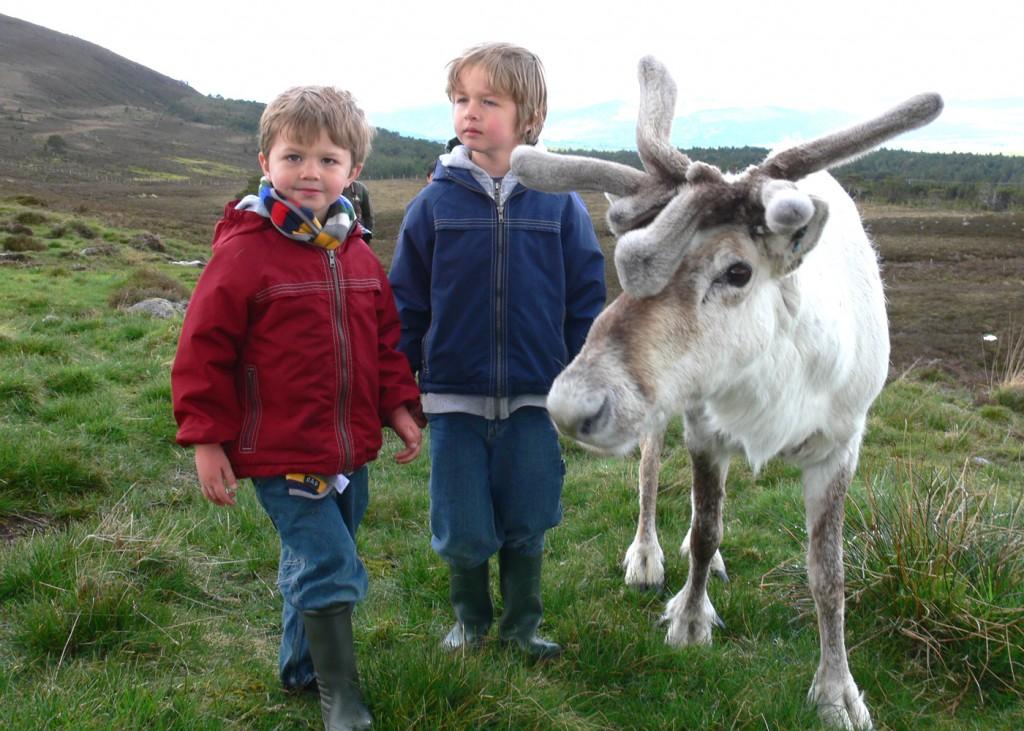 reindeer - 5x7
