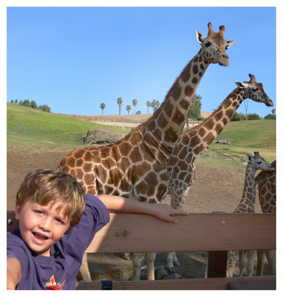seamus with giraffes polaroid