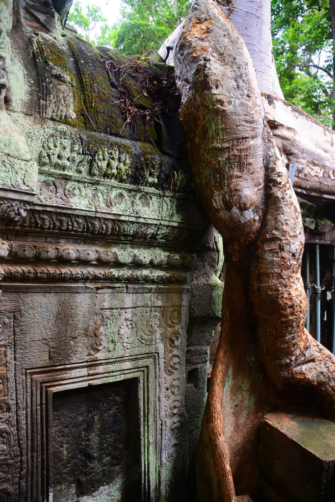 Tree root growing over temple at Ta Prohm, Angkor Wat, Cambodia