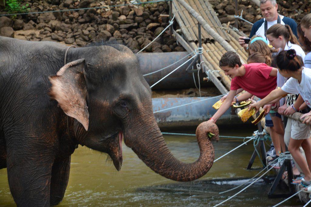 Elephant, Kanchanaburi, Thailand
