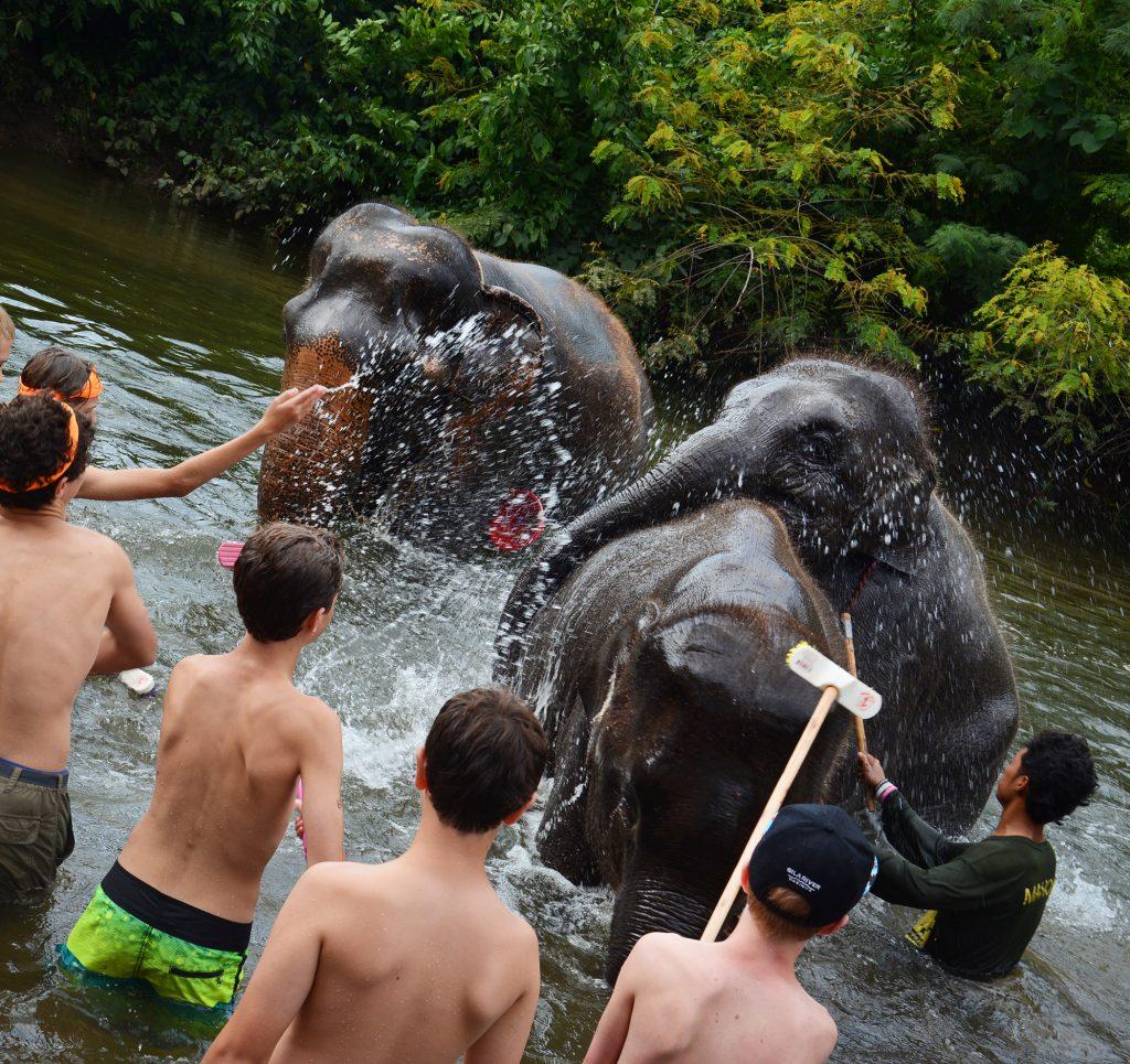 Elephant's World, Kanchanaburi, Thailand
