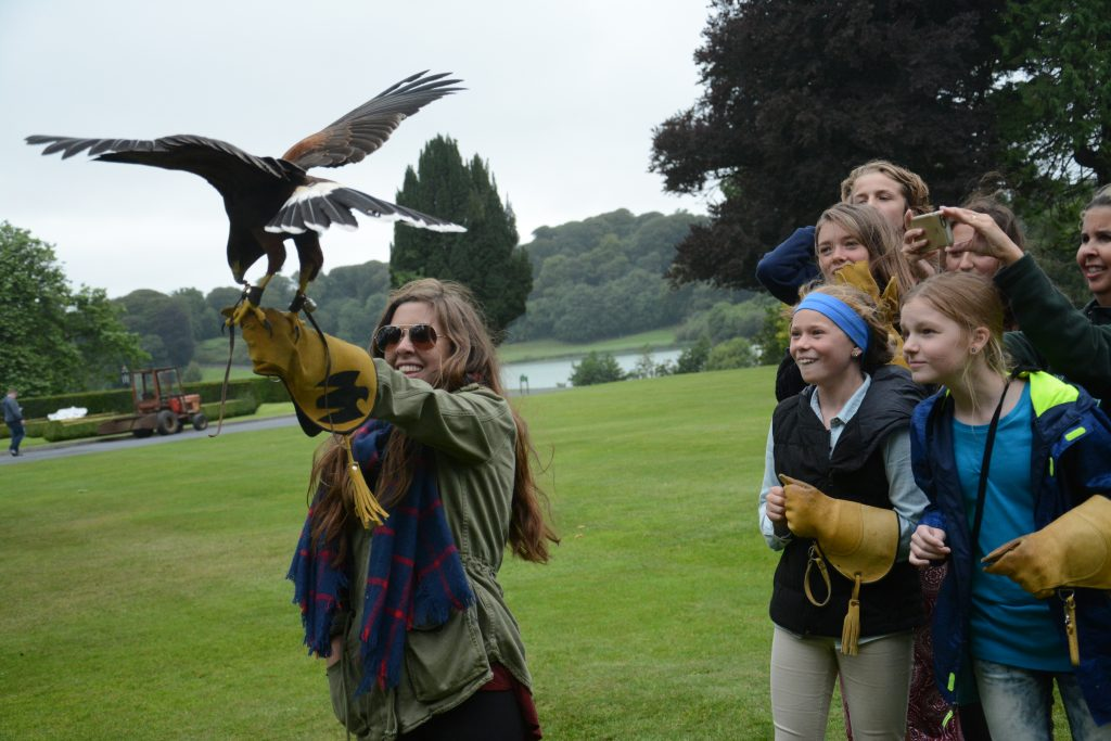 Flying hawk at Dromoland Castle