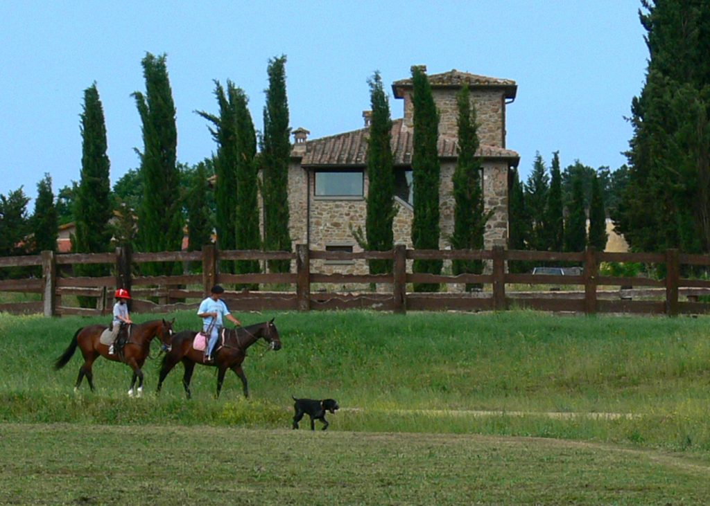 Riding polo horses, Tuscany, Italy
