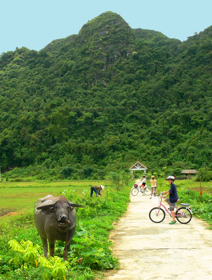 Seamus riding bike through rice paddies on family trip to Vietnam